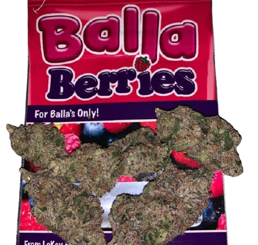 Balla Berries strain is now popular due to its sale in European counties coffeeshop due to its THC Level. An ordinary hybrid strain. That is a perfect combination of some strain with 50% Indica and 50% Sativa when crossing correctly.